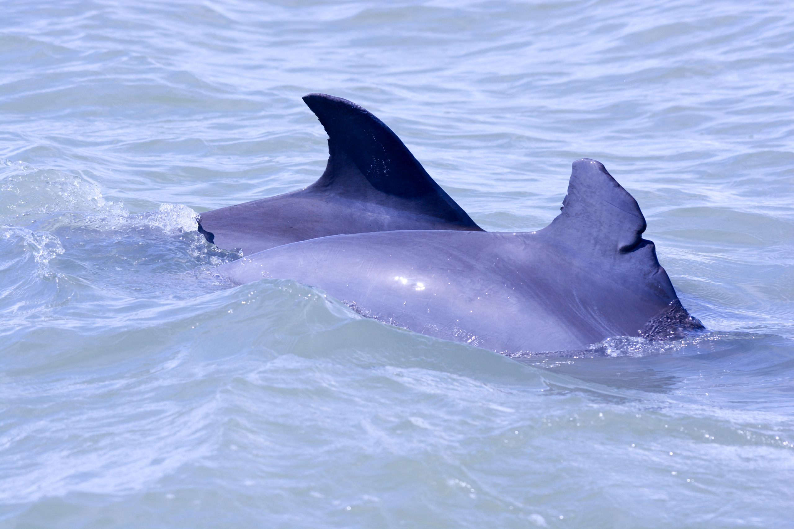 two dolphins