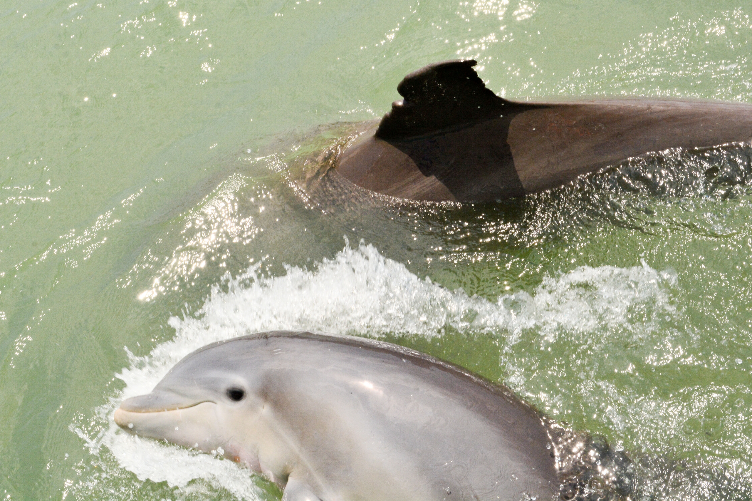 two dolphins socializing
