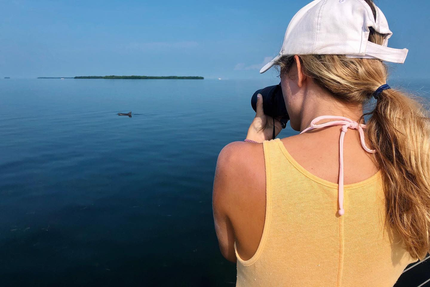 researcher photographing a dolphin